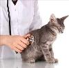 Ветеринарные клиники в Шаховской